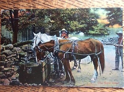 Vintage Valentine's Horse Postcard - The Noon Hour - 2 Working Horses At Trough