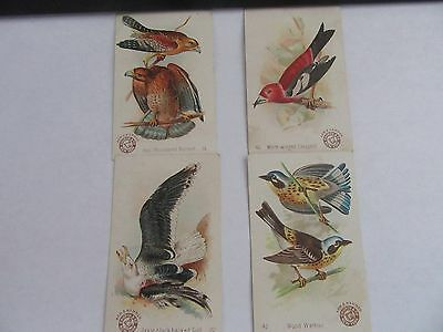 (4) Antique Arm & Hammer Beautiful Birds 1890's Trade Cards***#'s 14, 22, 40, 42