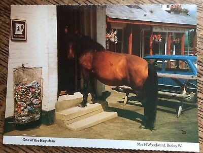 One Of The Regulars - Horse Postcard By Mrs H. Woodward , Botley WI - Unusual