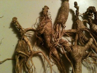 28.3 GRAM  APPALACHIAN MOUNTAIN WILD GINSENG ROOTS VERY OLD With LONG NECKS