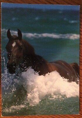 Postcard Of Chestnut Arabian Horse Galloping In Sea - New And What A Picture!