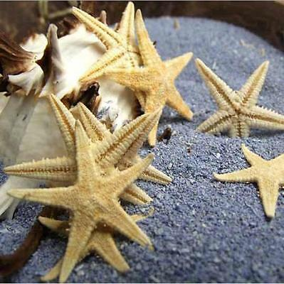 20pcs Natural Starfish Decorations Crafts Decor for Micro Landscape Mixed Size