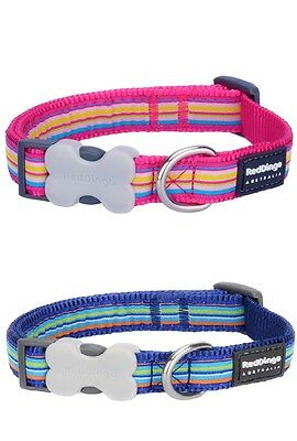Red Dingo Stripe Dog or Puppy Collar PINK or BLUE Bright & Modern FREE P&P