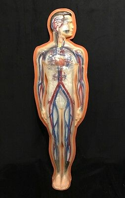 Large Antique / Vintage Human Circulatory System Anatomical Model Arteries Veins