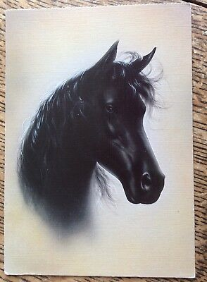 Horse Postcard - Artist's Portrait Of A Black Head - Friesian? VGC