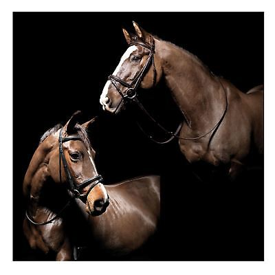 Caldene Horse Comfort With Padded Nose & Browband Padded Flash Snaffle Bridle