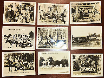 Florida; 9 Small Photos Lewis Plantation; African Americans; Turpentine Still