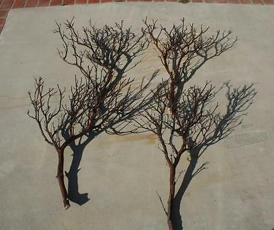 """6 FULL 24"""" Manzanita Branches for centerpieces or wishing trees for wedding"""