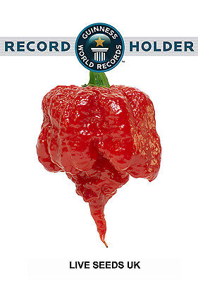 Liveseeds - 10 Seeds ''CAROLINA REAPER'' Chilli -WORLD RECORD CHILLI PEPPER