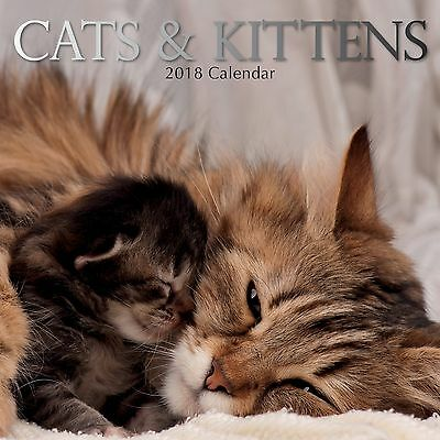 Cats & Kittens	2018 Square Wall Calendar