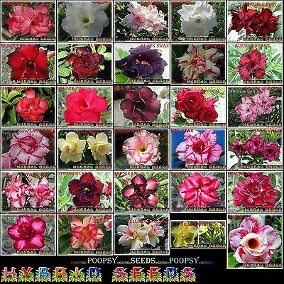 ❀⊱ Adenium Obesum Desert Rose ❀30 Pick❁ House Plant Bonsai Seeds Ƹ̵̡ӝ̵̨̄ʒ⊰✾Kh1