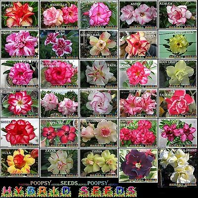 ❀⊱ Adenium Obesum Desert Rose ❁30 Pick❀ House Plant Bonsai Seeds Ƹ̵̡ӝ̵̨̄ʒ⊰✾Kh2.