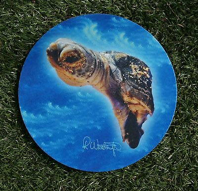 Baby Sea Turtle Absorbent Car Coasters (2) by Rose West Photo