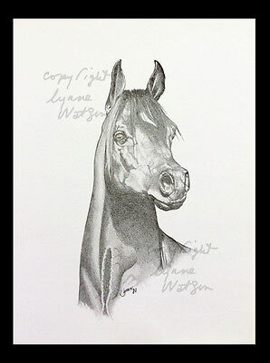 "VINTAGE PRINT. ARABIAN HORSE.FROM PENCIL ART..  IMAGE  size - 8.75"" x 4.25"""