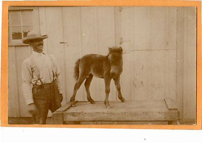 Real Photo Postcard RPPC - Young Foal and Proud Farmer - Animal Horse