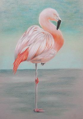 Original A3 coloured pencil drawing Picture of a flamingo