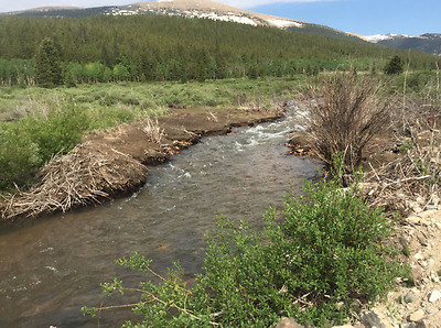 20 Acre Fourmile Creek Placer Gold Claim, Colorado Rockies, FairPlay District