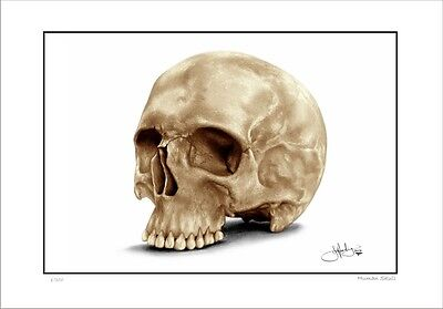 Human Skull    Skeleton   Anatomy       Limited Edition   Print