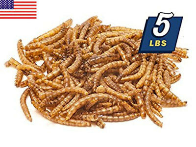 US Hotsale 5Lbs/2.25kg Bulk Dried Mealworms Treats for Chickens Fish Wild Birds