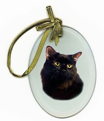 DOMESTIC SHORTHAIR CAT Oval Glass Ornament Suncatcher