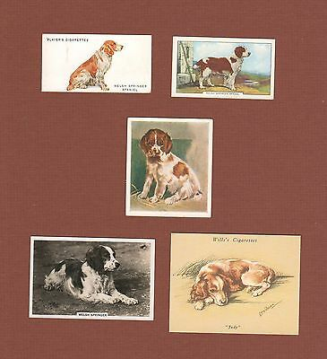 Welsh Springer Spaniel dog cigarette trade cards set of 5