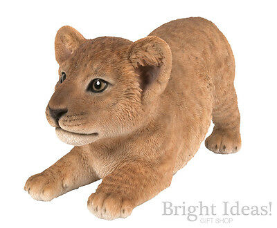 Vivid Arts - REAL LIFE ZOO ANIMALS - Playful Lion Cub