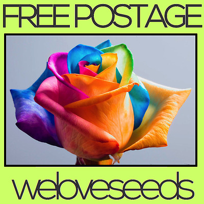 LOCAL AUSSIE STOCK - Rainbow Rose, Flower Seeds ~20x FREE SHIPPING