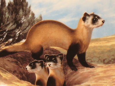 Endangered Species Collector Plate Black Footed Ferret Will Nelson