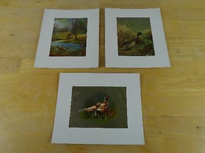 "Lot of 3 Vintage Wild Bird Art Pictures 10"" x 12"" Pheasants and Mallard Ducks"