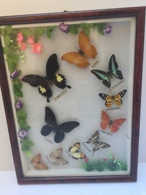 "Vintage Butterfly Collection In Glass Framed Display Case Garden Look 17"" X 13"""