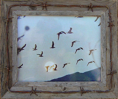 Antique, 5X7  Barn-Wood Picture Frame W/ Barb-Wire