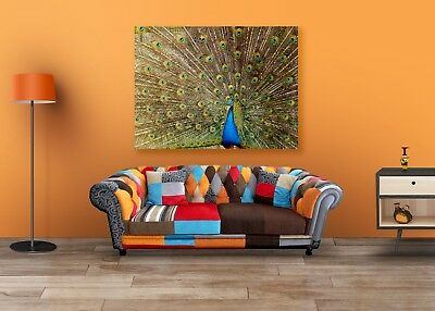 Beautiful Peacock Stretched Framed Canvas Prints Wall Art DIY Home Decor