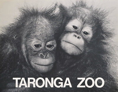 """Taronga Zoo"" Orangutans c1970s promotional photo-litho poster linen-backed"