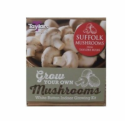 Small White Button Mushroom Growing Kit by Taylors Bulbs - FREE P&P