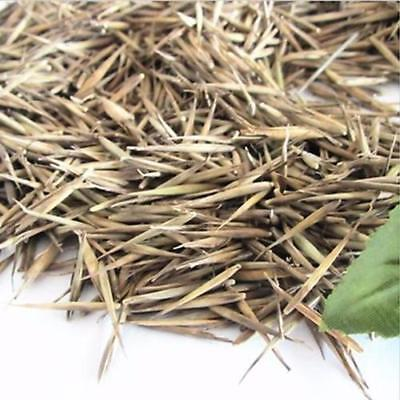 5pack Tinwa Green Phyllostachys Pubescens Moso-Bamboo Seeds Plants Bamboo