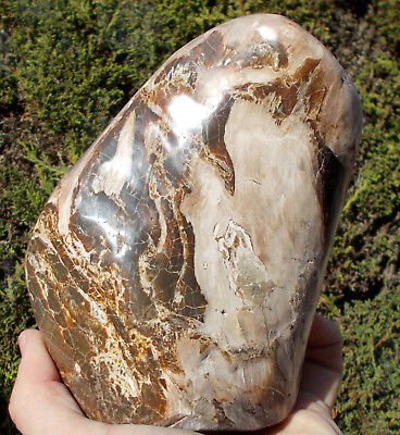 Large Fossil Wood Specimen from Indonesia - 1.5kg. Ref:INW1 fossils
