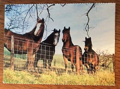Horse Postcard - Good Companions - A Women's Institute Card - New Unused Mint