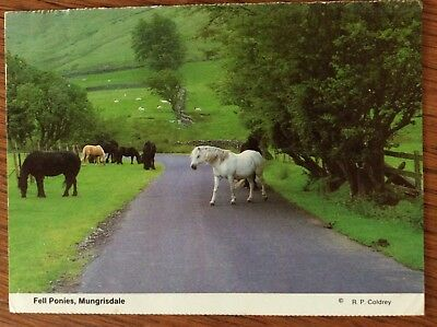 Horse Postcard - Fell Ponies In Mungrisdale By R.P. Coldey -used Card In VGC