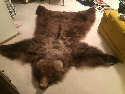 Genuine Alaskan Silver-tipped Grizzly Rug
