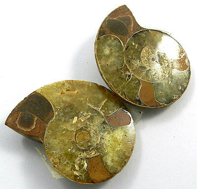 41.80Gram Superb quality 1 Pair NATURAL AMMONITE FOSSIL 36x45MM fancy gemstone