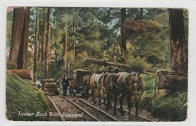 VINTAGE POSTCARD   A TIMBER BUSH TEAM GIPPSLAND VICTORIA 1900s