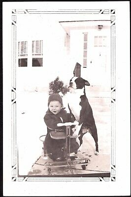 Vintage Photograph 1920-30's Boston Terrier Dog Puppy Anderson Indiana Old Photo
