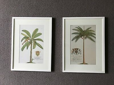 White Professionally Framed Print of Palm Tree and Banana Tree