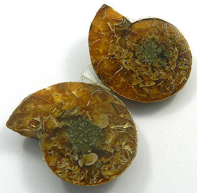 32.32GM 1 Pair 100% NATURAL AMMONITE FOSSIL 31x39MM natural shape nice gemstone