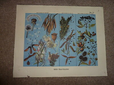 Vintage Schools Poster ?40's 50's. Seed Travellers No. 73