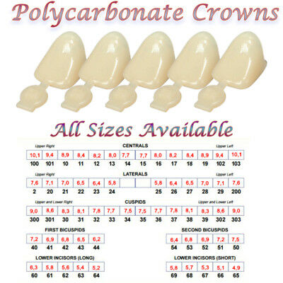 Polycarbonate Temporary Dental Tooth Crowns -All Sizes Available-