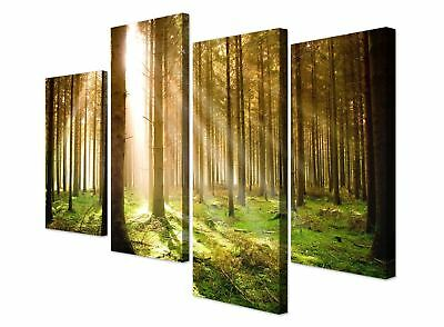 Large Green Woodland Forest Sunlight Trees Canvas Pictures - Set of 4 Prints