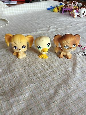 Littlest Pet Shop Spaniel twins 200 291 and duck 199