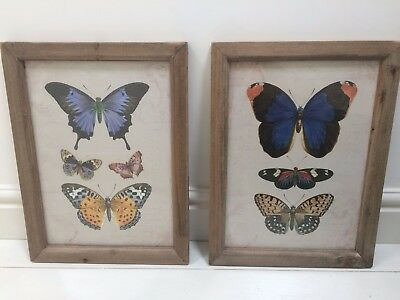 Pair of large BUTTERFLY vintage style illustration prints in  RUSTIC FRAMES