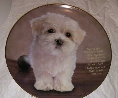 Cherished Maltese Adoring eyes plate  from Danbury Mint 8-1/4""